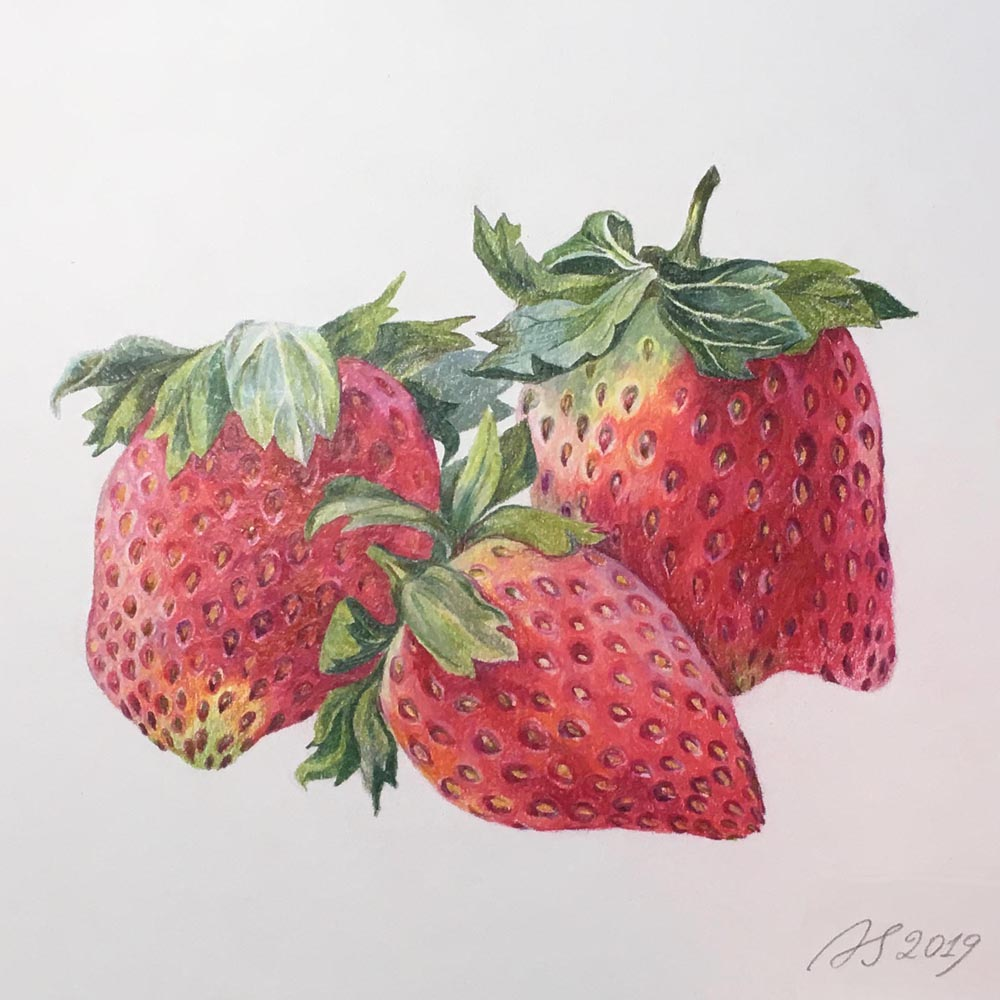 """Strawberries Study, 2019. Colored pencils on paper, 12x16""""."""