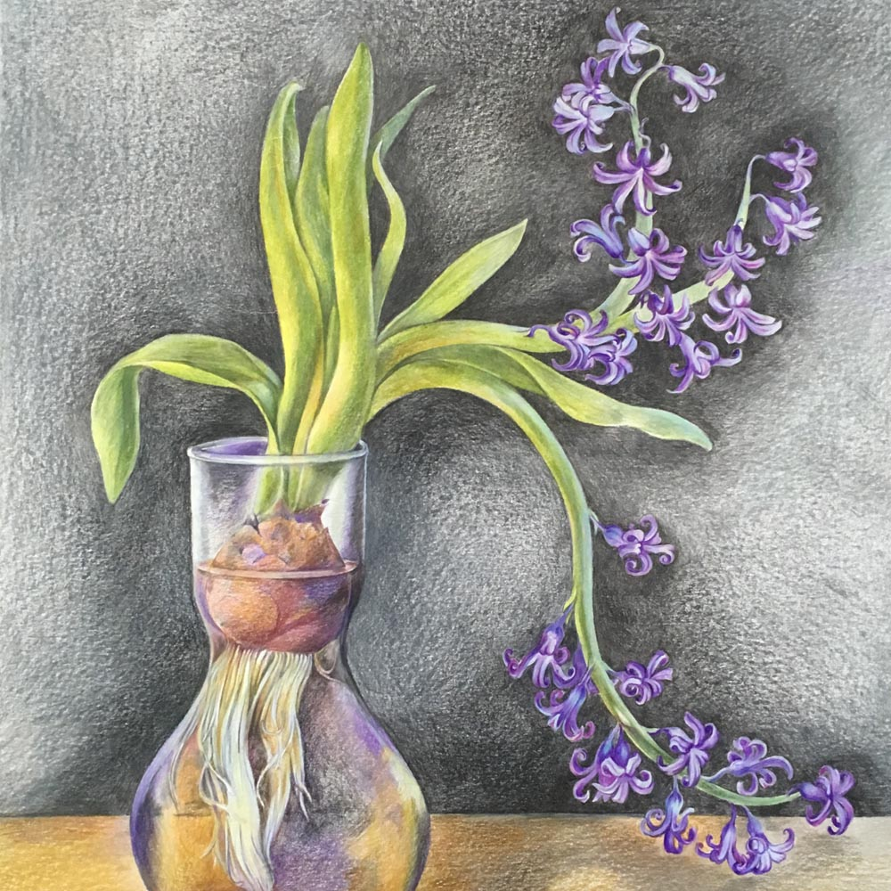 Composition with a Hyacinth in a Vase. 2019. Colored pencils on paper.