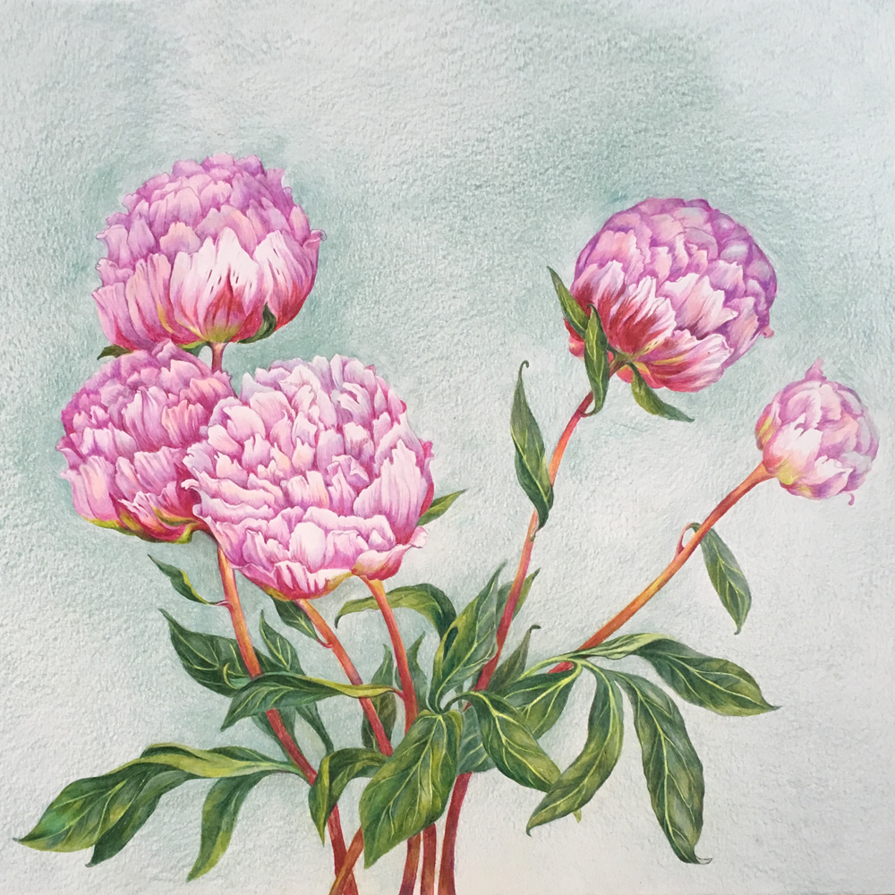 Peonies. 2019. Colored pencils on paper.